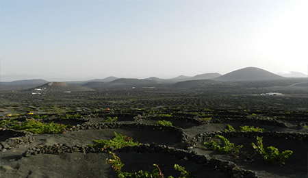 Planning your Winery Tierra de Volcanes Tour? Looking for the best deals on Lanzarote Island wine tours and other fun things to do in Lanzarote? Book your Lanzarote wine tours here  - Best Deals for Winery Tierra de Volcanes Visits - Winery Tierra de Volcanes Tour